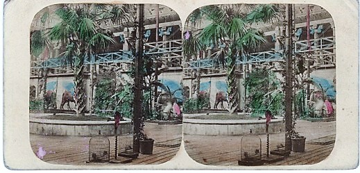 HAND-COLORED STEREOSCOPIC VIEW, CRYSTAL PALACE: THE GREAT PALM AND NINEVEH COURT. Tropical Department. London England.