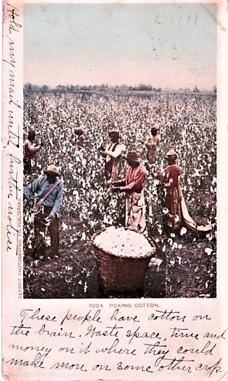 """""""PICKING COTTON"""": FULL-COLOR POSTCARD OF SEVEN AFRICAN-AMERICANS IN A FIELD OF COTTON. Vicksburg Mississippi."""