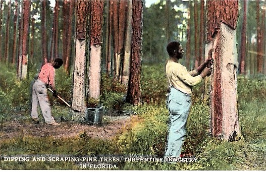 """DIPPING AND SCRAPING PINE TREES, TURPENTINE INDUSTRY IN FLORIDA"": FULL-COLOR POSTCARD OF TWO AFRICAN-AMERICAN MEN PEELING THE BARK FROM TALL PINES. Florida."