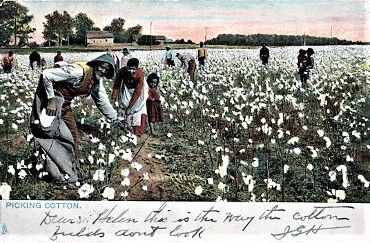"""PICKING COTTON"": FULL-COLOR POSTCARD OF 11 ADULT AFRICAN-AMERICANS AND A LITTLE GIRL WORKING IN A FIELD OF COTTON. Waco Texas."