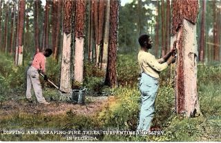 """DIPPING AND SCRAPING PINE TREES, TURPENTINE INDUSTRY IN FLORIDA"": FULL-COLOR POSTCARD OF TWO..."